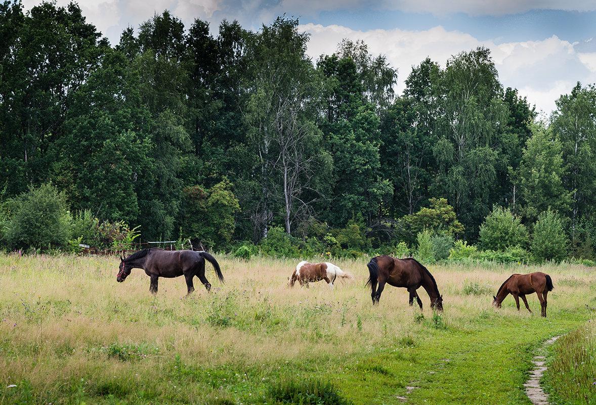 Ходят кони... - Людмила Финкель