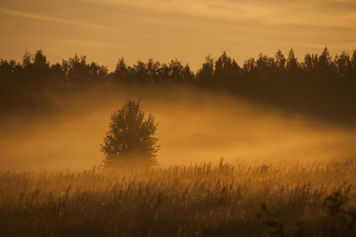 Утренний туман 1 - Николай Алексеев
