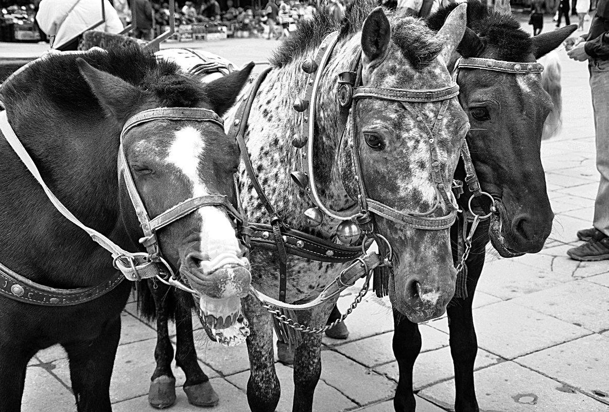 как ржет лошадь - Лена Арефьева