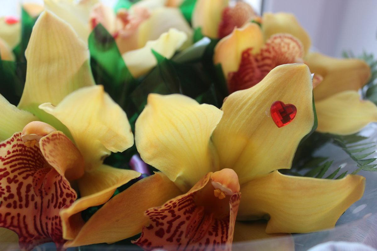 Орхидеи - RaflaNa Sama
