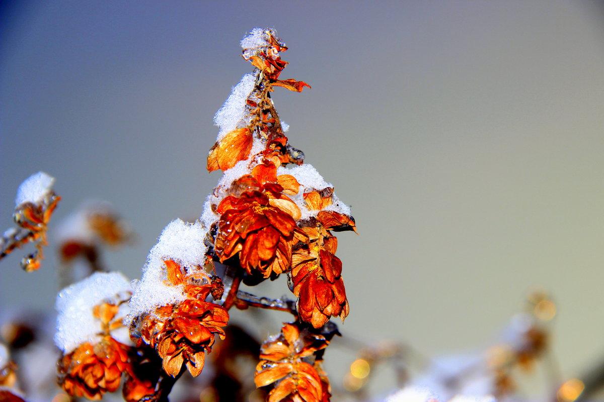 Зима - Анатолий Мартынюк