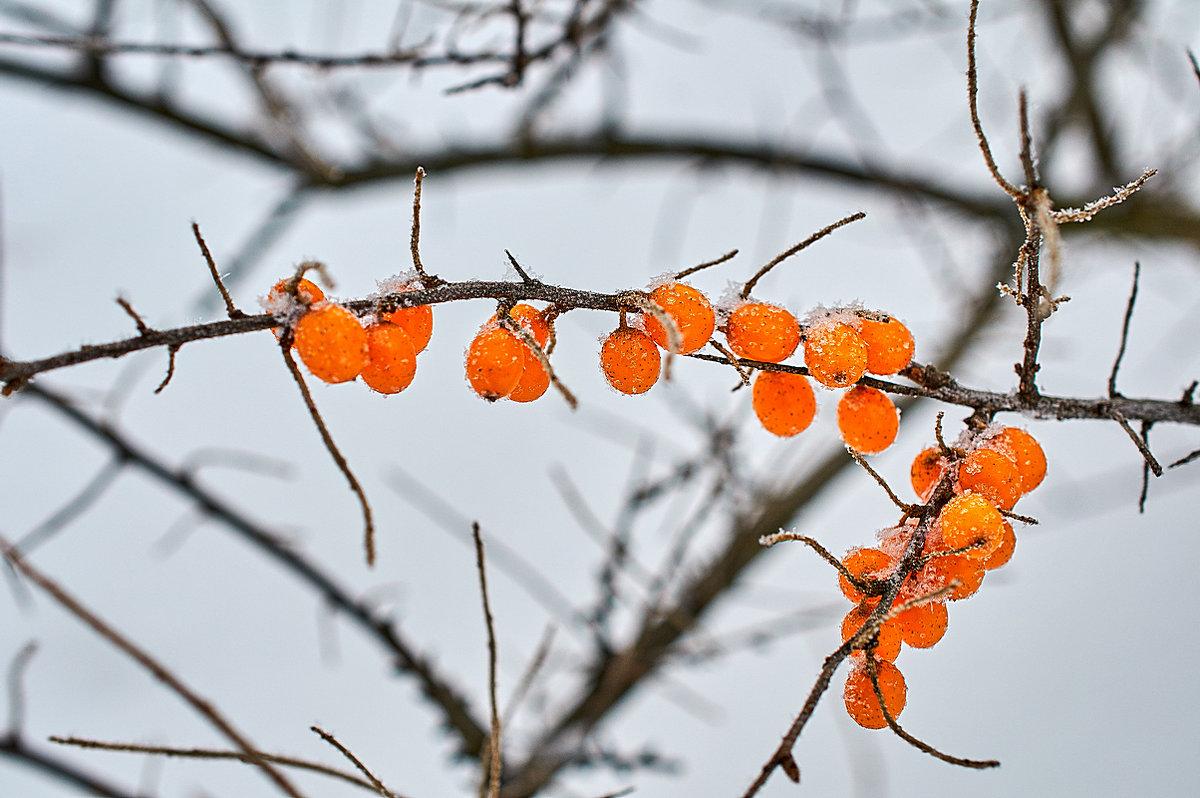 Зимой и летом - одним цветом. - Андрей Куприянов