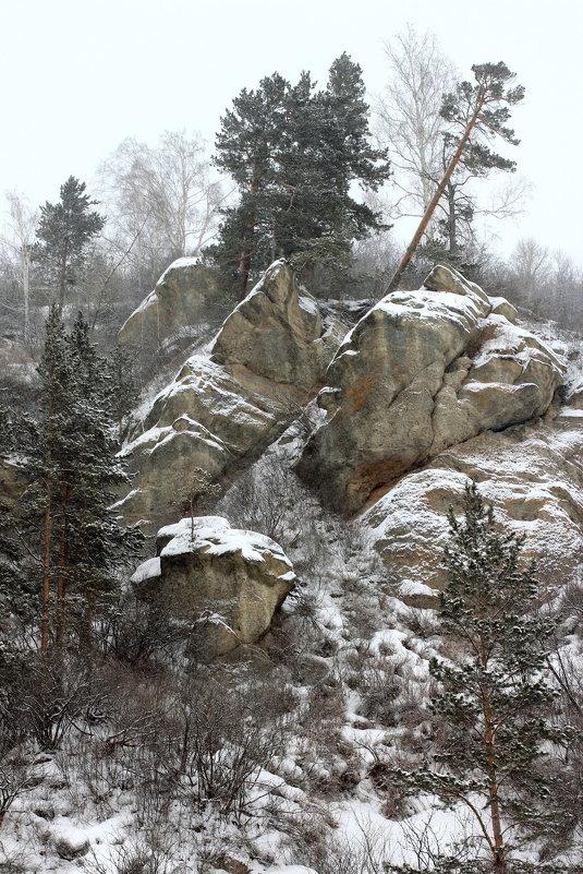 И на камнях растут деревья - Дмитрий Арсеньев