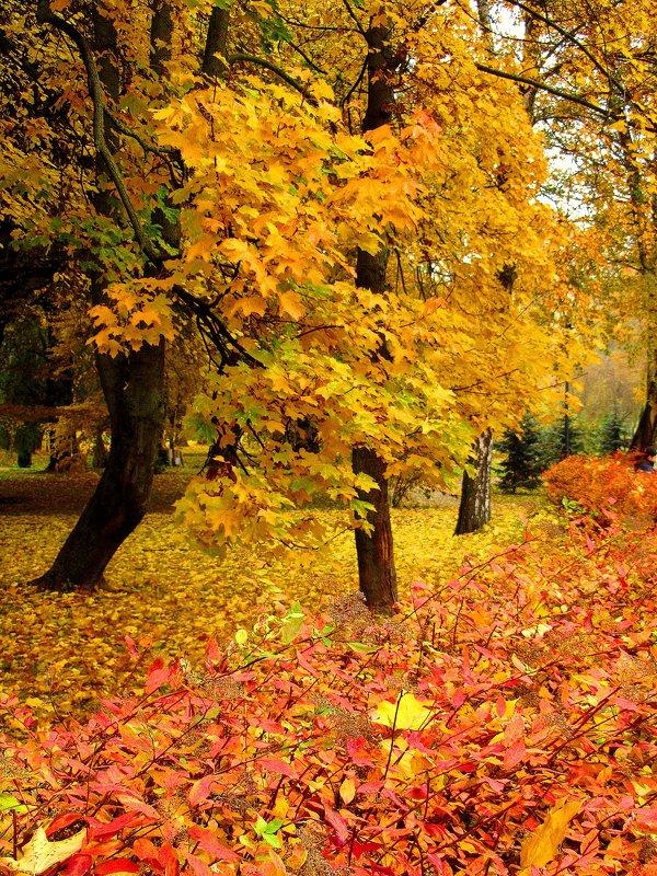 Осенние цвета - Сергей Карачин