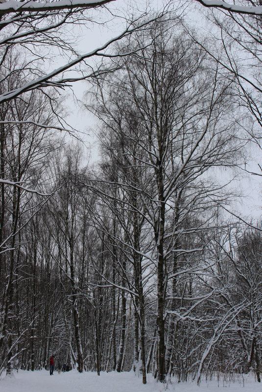 Зимние дали - Людмила Монахова
