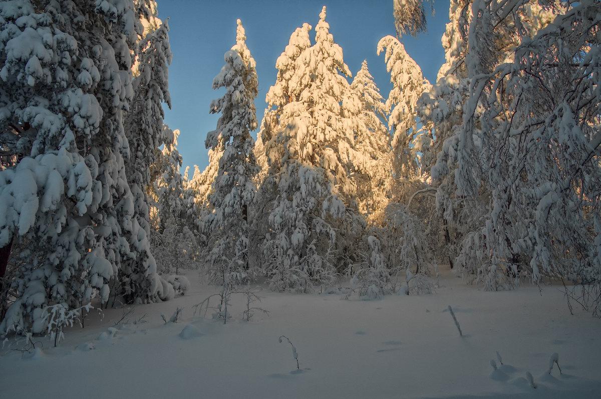 Снежное царство - vladimir Bormotov