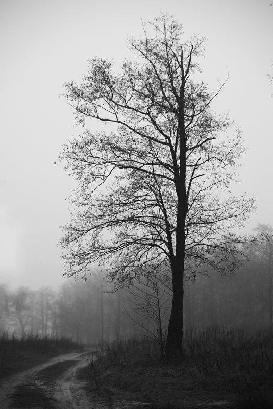 туман - Евгений Целищев