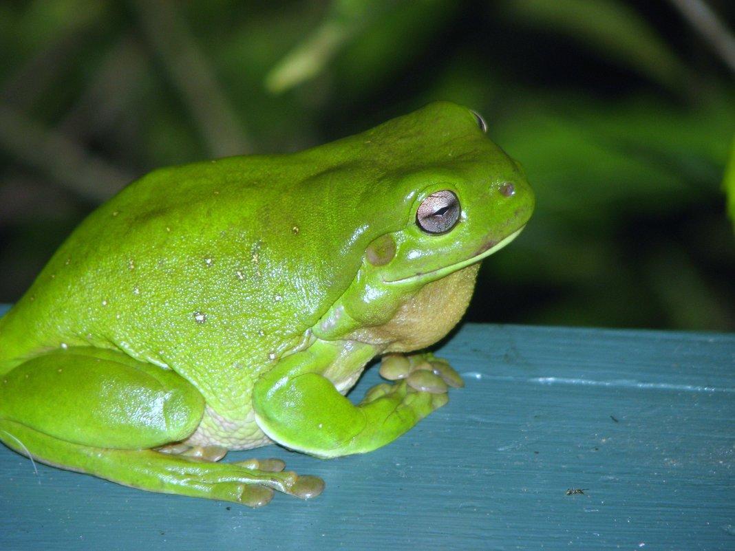 Царевна-лягушка - Антонина