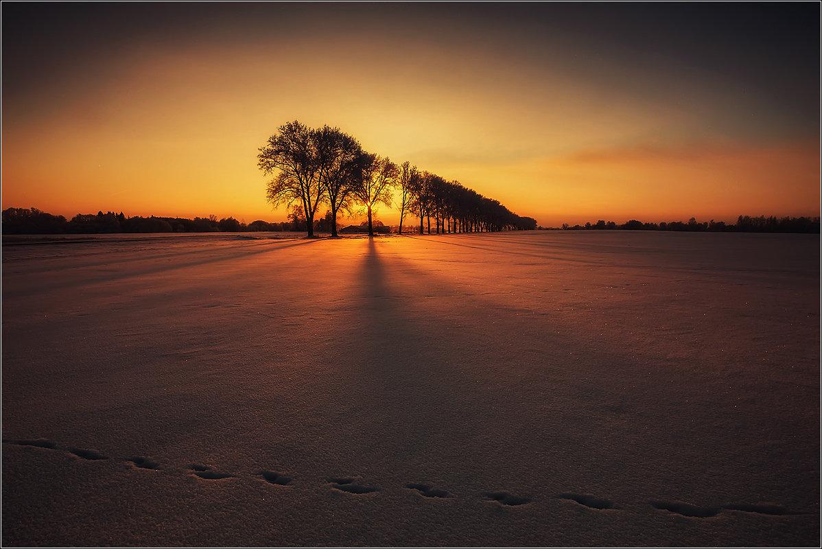 Evening - Daiva