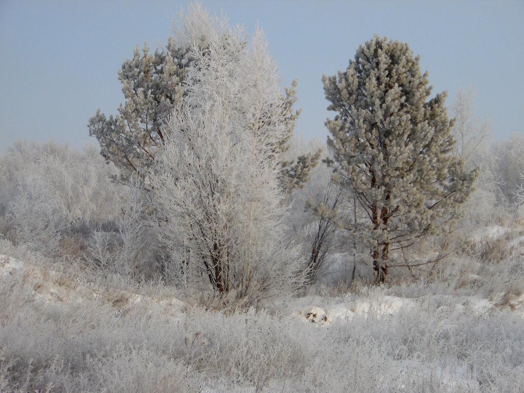 Зимним морозным деньком. - nadyasilyuk Вознюк