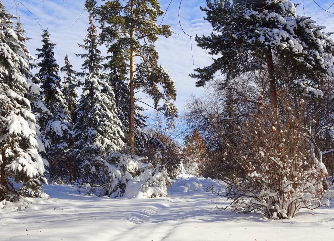 Зима...Снежный запустила свой круговорот... - Елена Ярова
