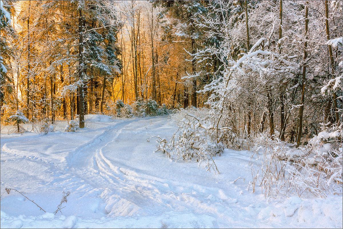 В лесу... - Александр Никитинский