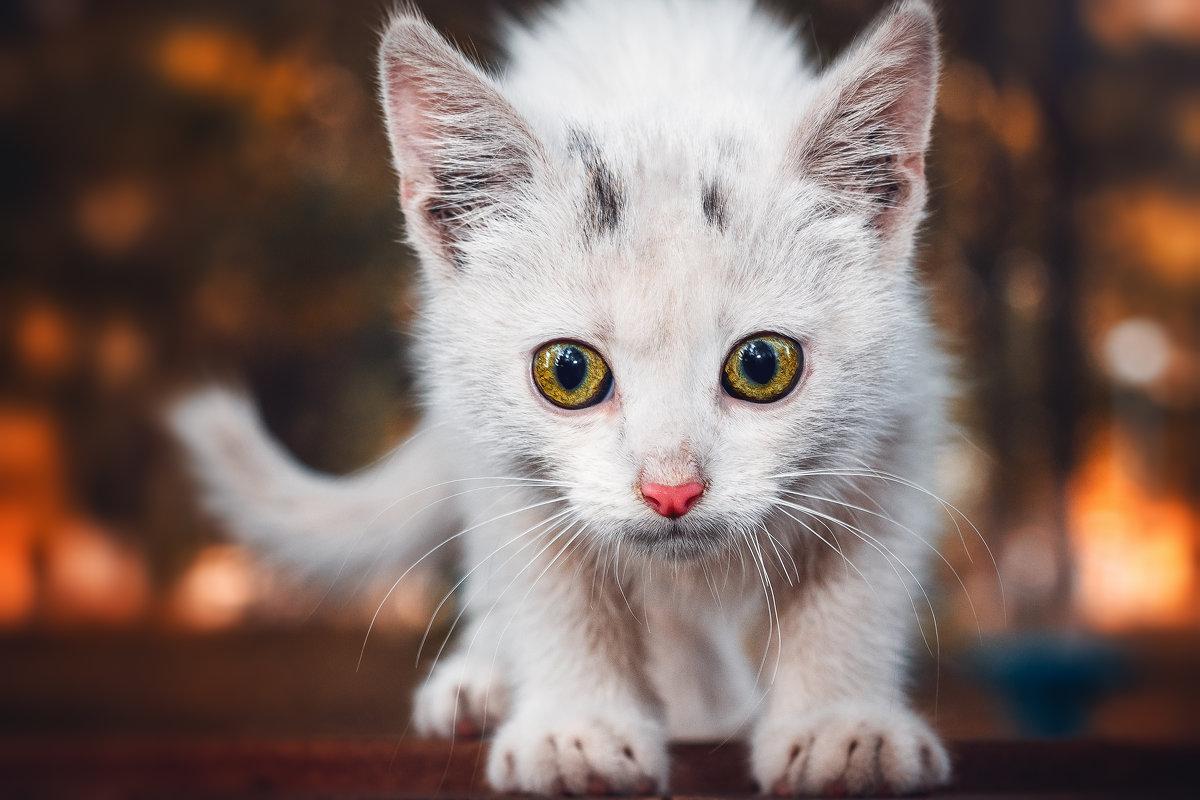 Котёнок - Studia2Angela Филюта
