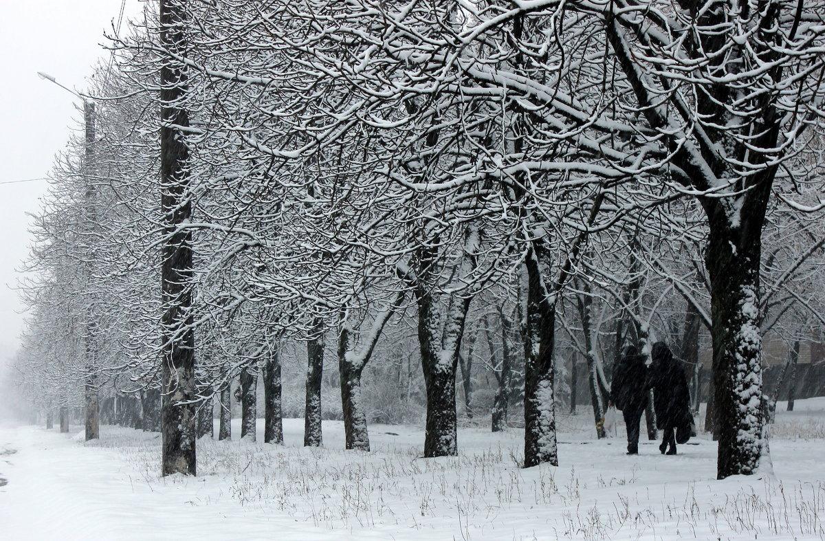 Деревья в снегу. - Валентина ツ ღ✿ღ