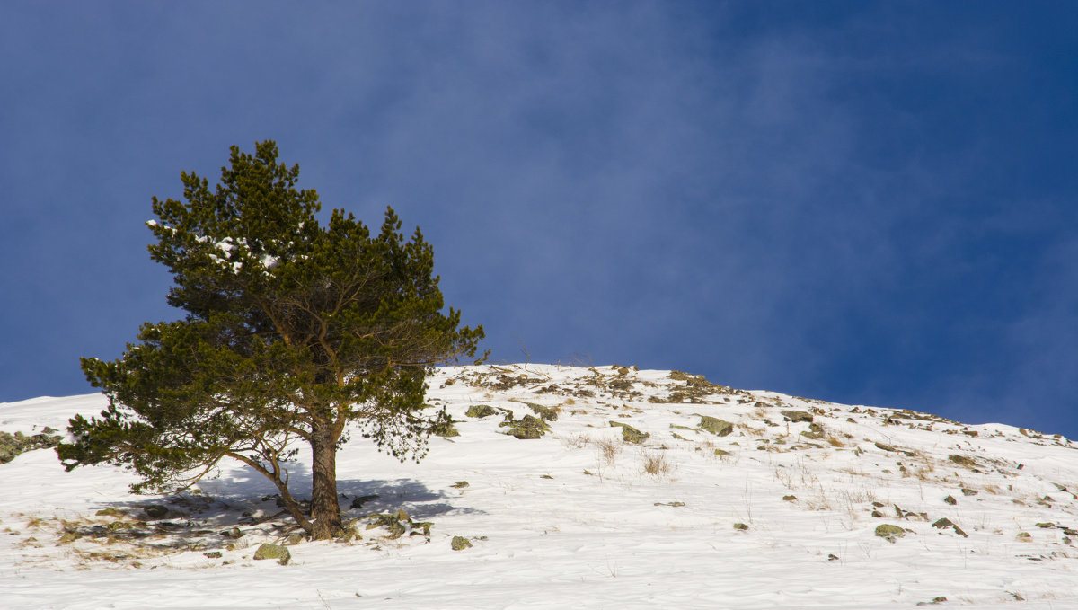 дерево в горах - Евгений