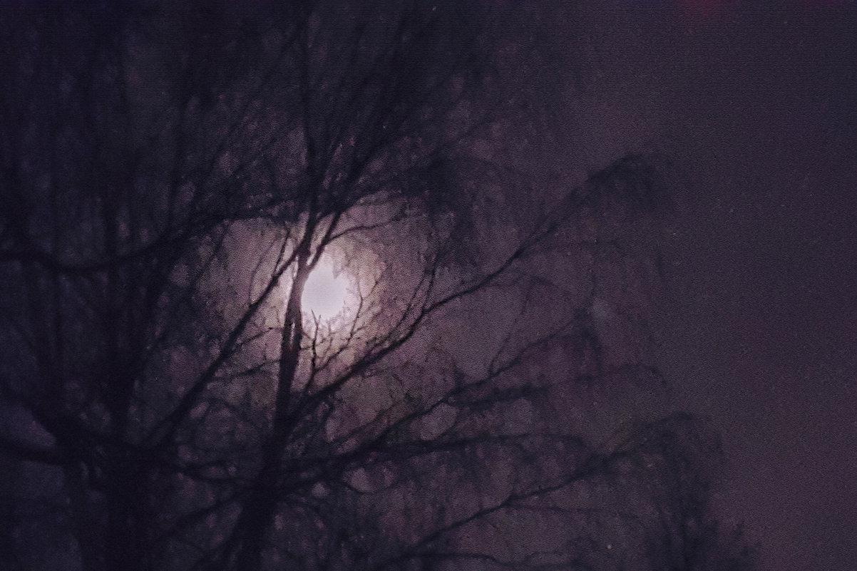 Лунное дерево - Длинный Кот