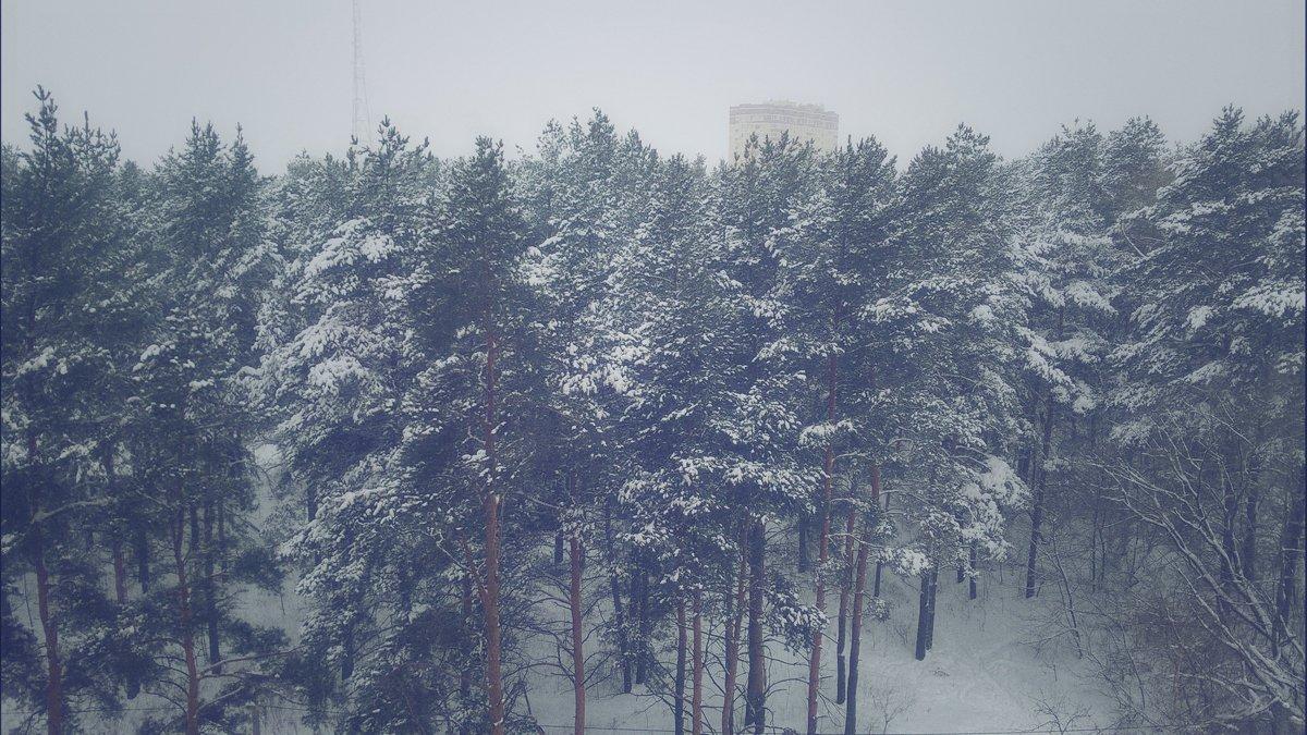 Зимний лес - Марина Иванова