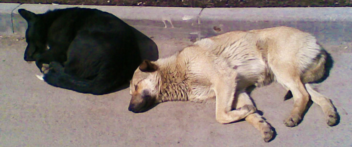 Две собаки - подружки - Владимир Ростовский
