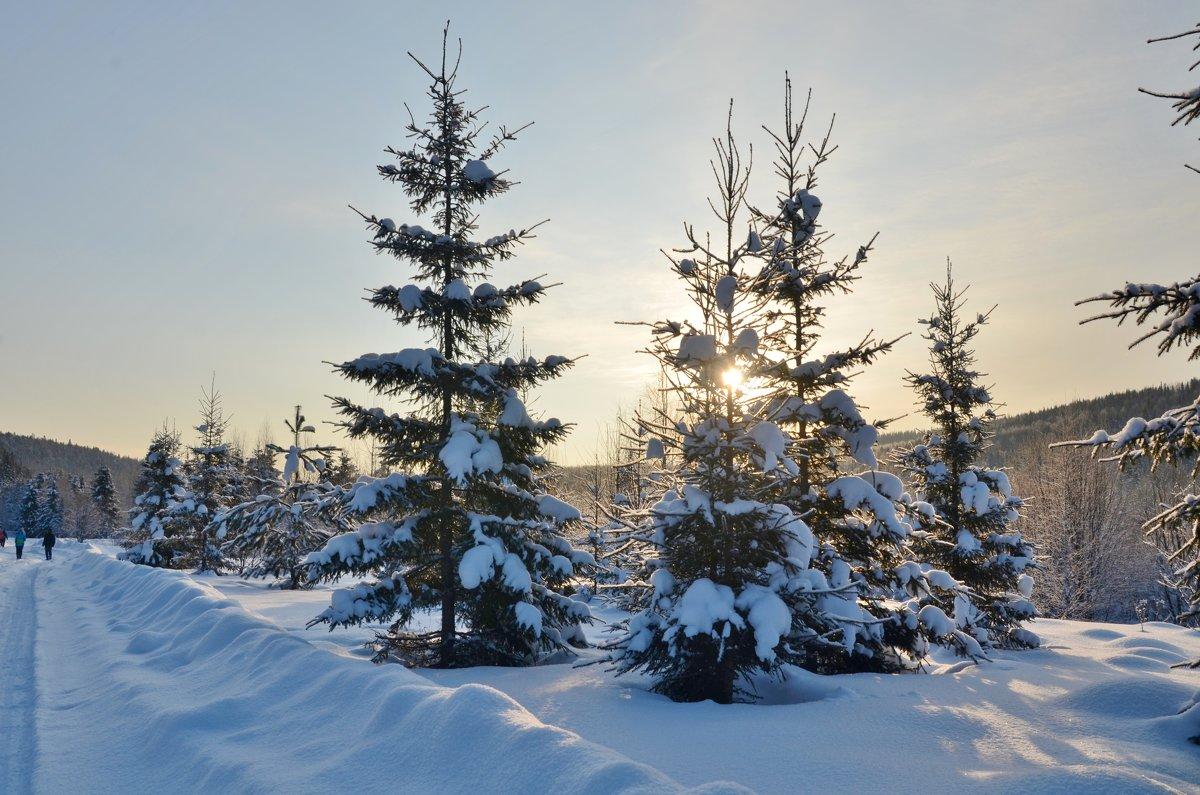зима 2 - Константин Трапезников