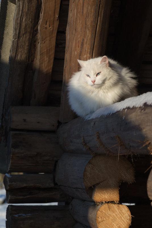 Греется на зимнем солнце - Светлана