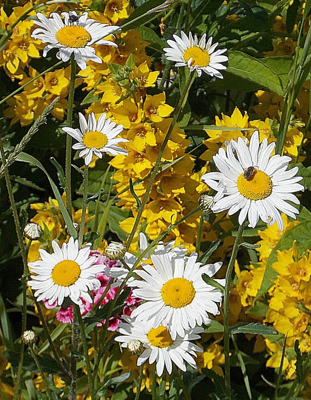 Летняя тема, которую все очень любят - букашка+цветочек - Фотогруппа Весна.
