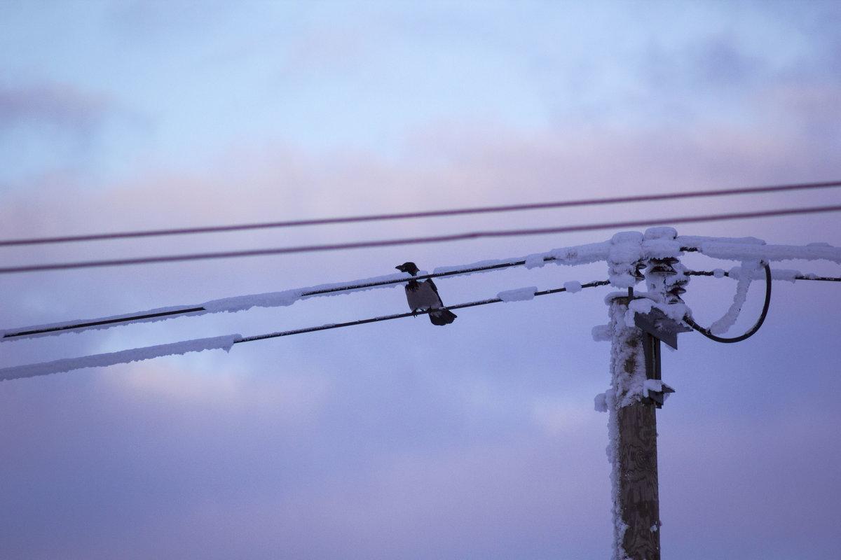 Зимняя птица - Aнна Зарубина