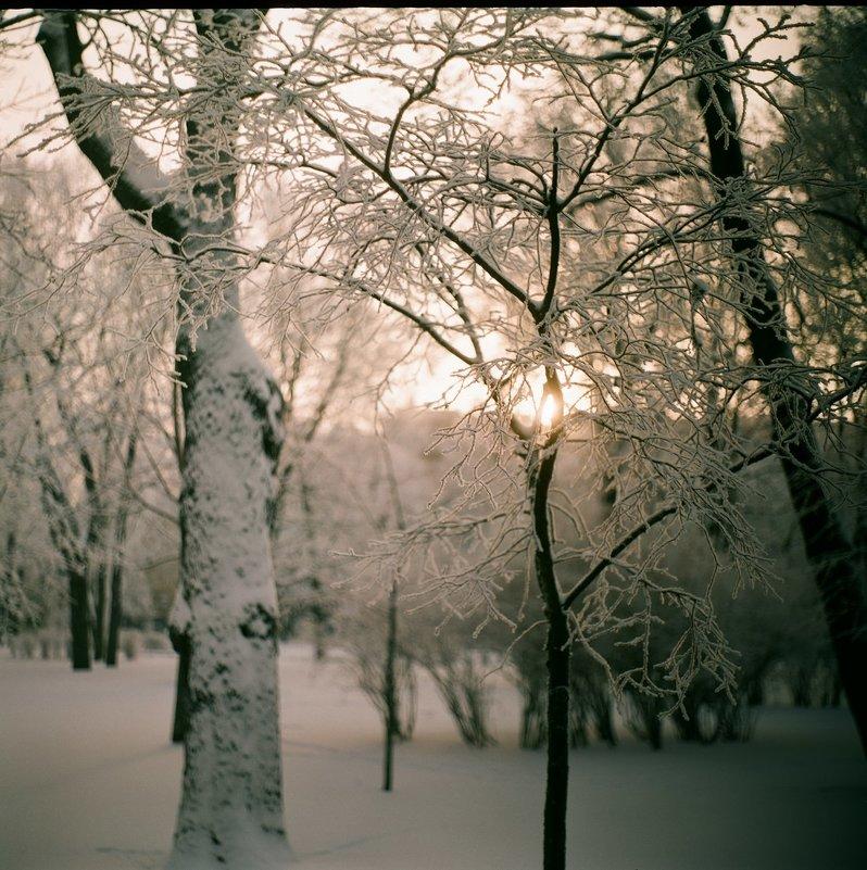 Зимнее утро в Санкт-Петербурге - Ivan Zaytcev