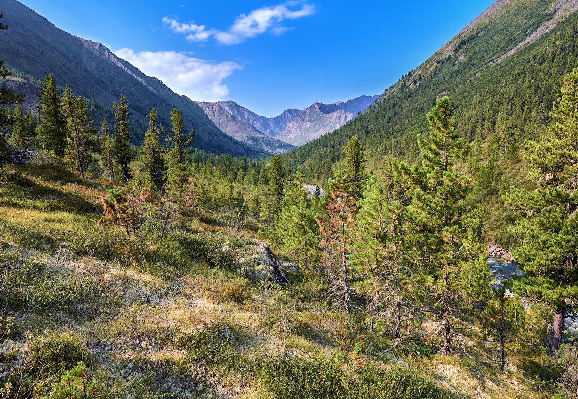 Сибирское горное редколесье - Виктор Никитин