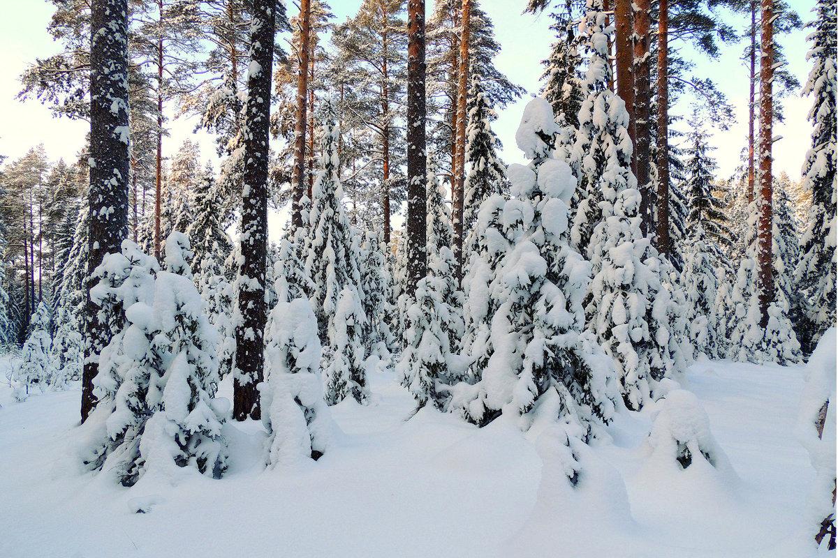 В лесу - Павлова Татьяна Павлова