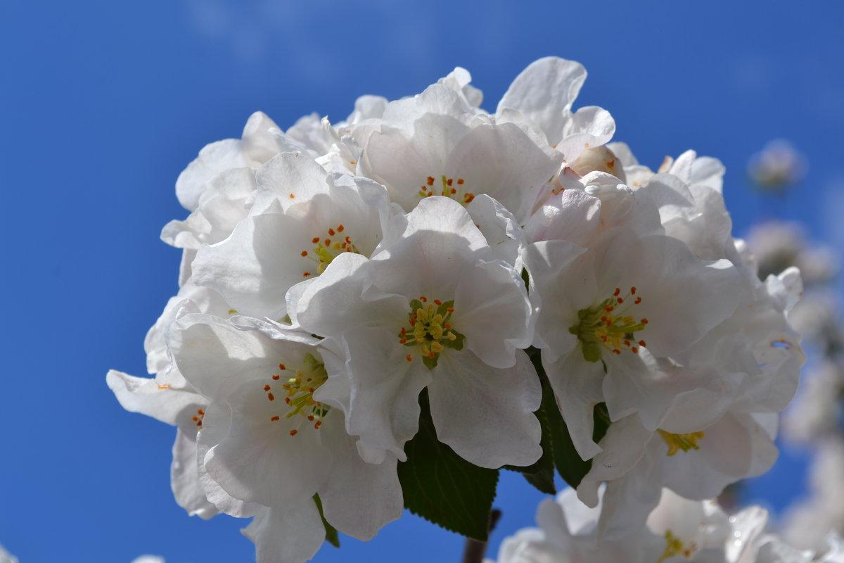 Весна - Леся Вишня