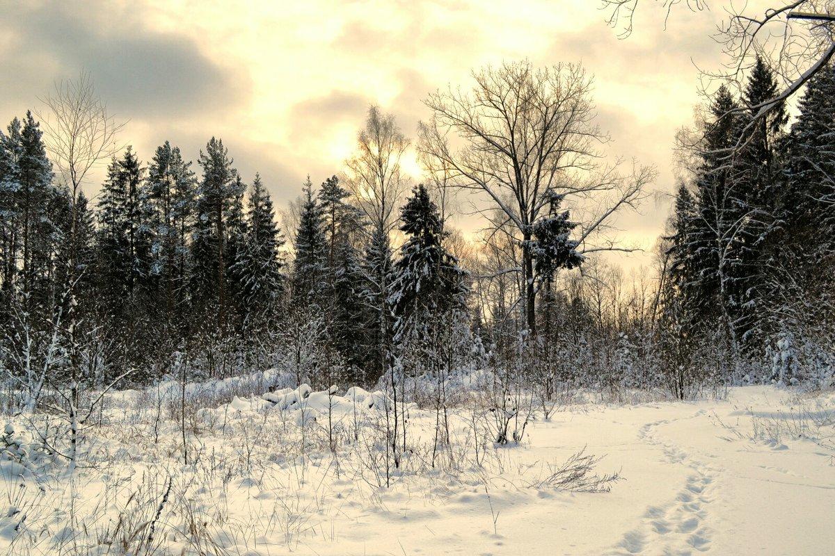 Зима на Смоленщине 2016 - Милешкин Владимир Алексеевич
