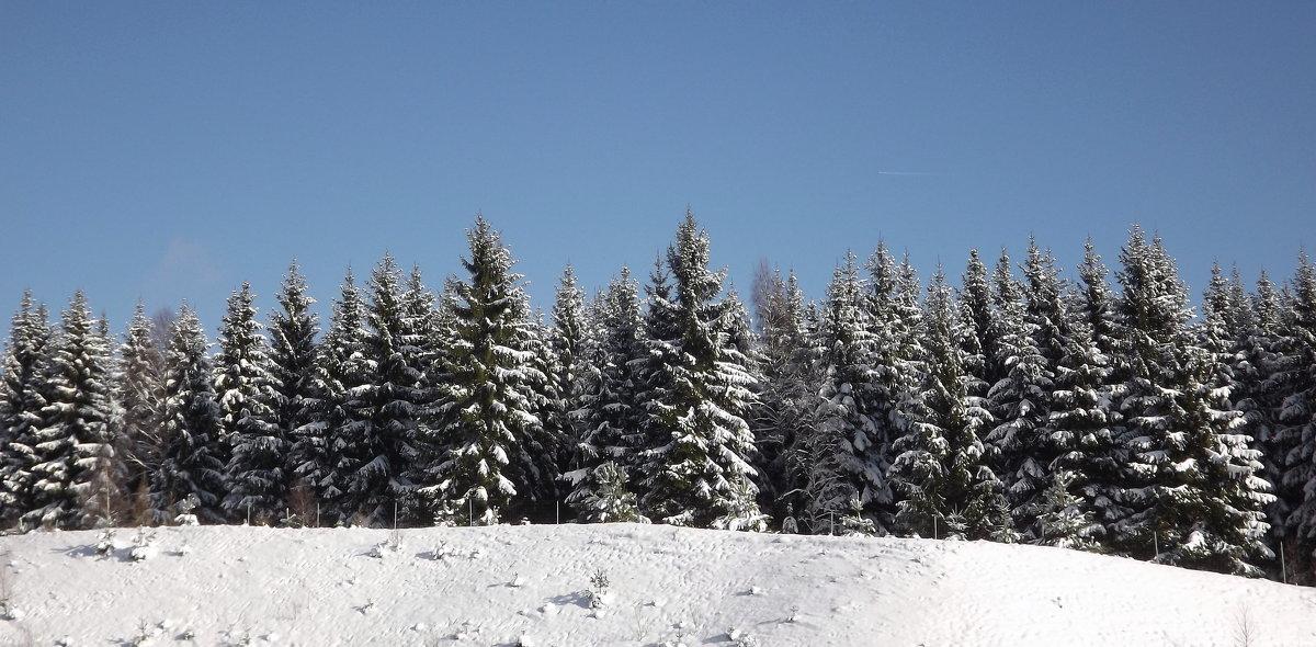 Зима... - Эдвард Фогель