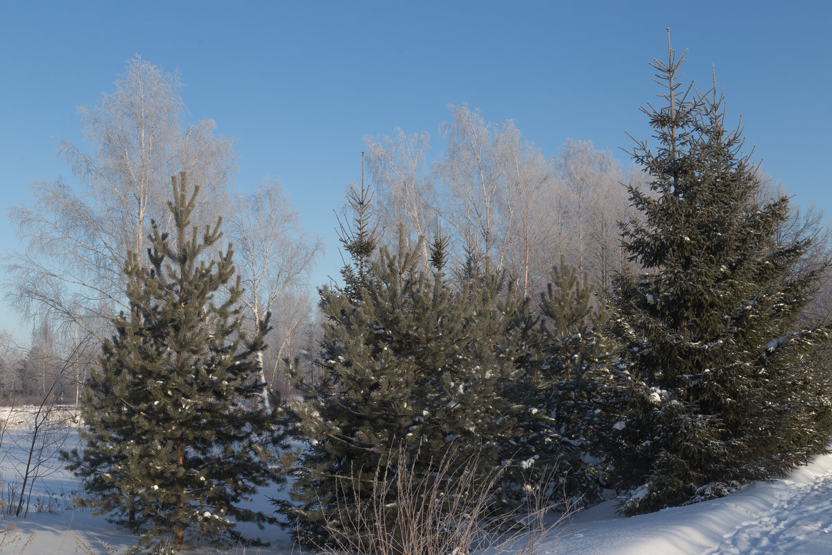 Морозным днем - Светлана