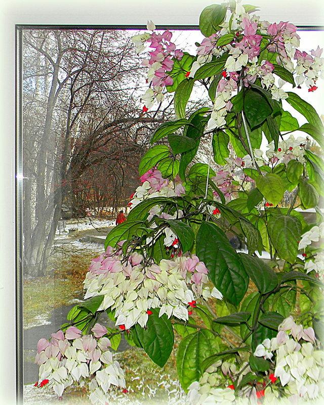 первый снег за окном - Надежда Ерыкалина