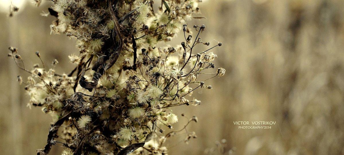 Цивилизация Маленьких - Виктор | Индеец Острие Бревна