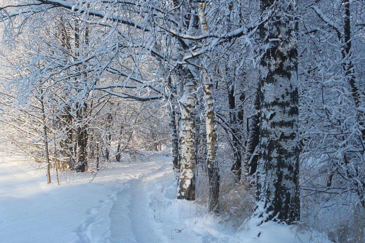 Зимняя дорожка - Наталья Лунева