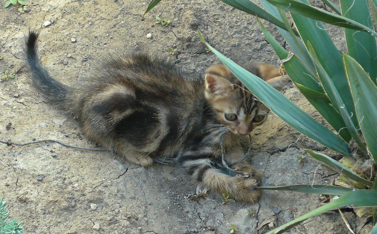 Котёнок - Вера Щукина