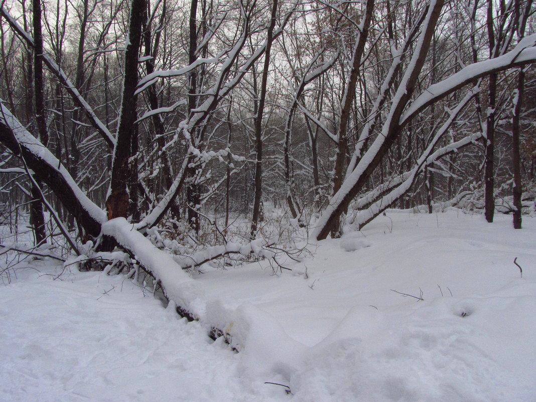 Зима в Измайловском парке - Андрей Лукьянов