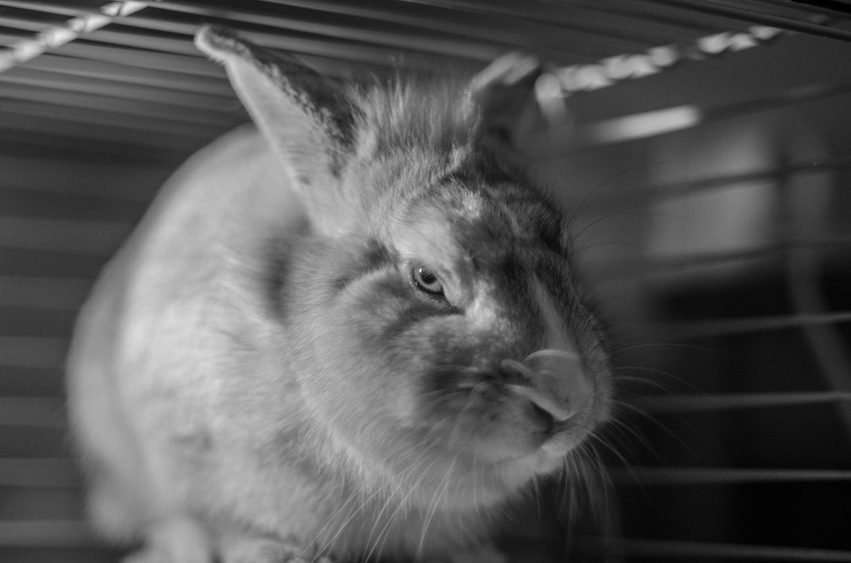 кролики злы - Анна Мальм