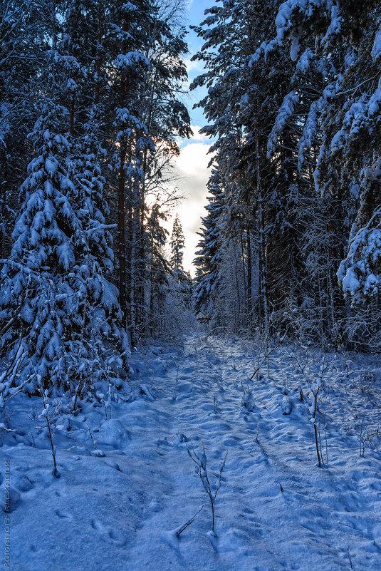 Зимний лес - Александр Романов