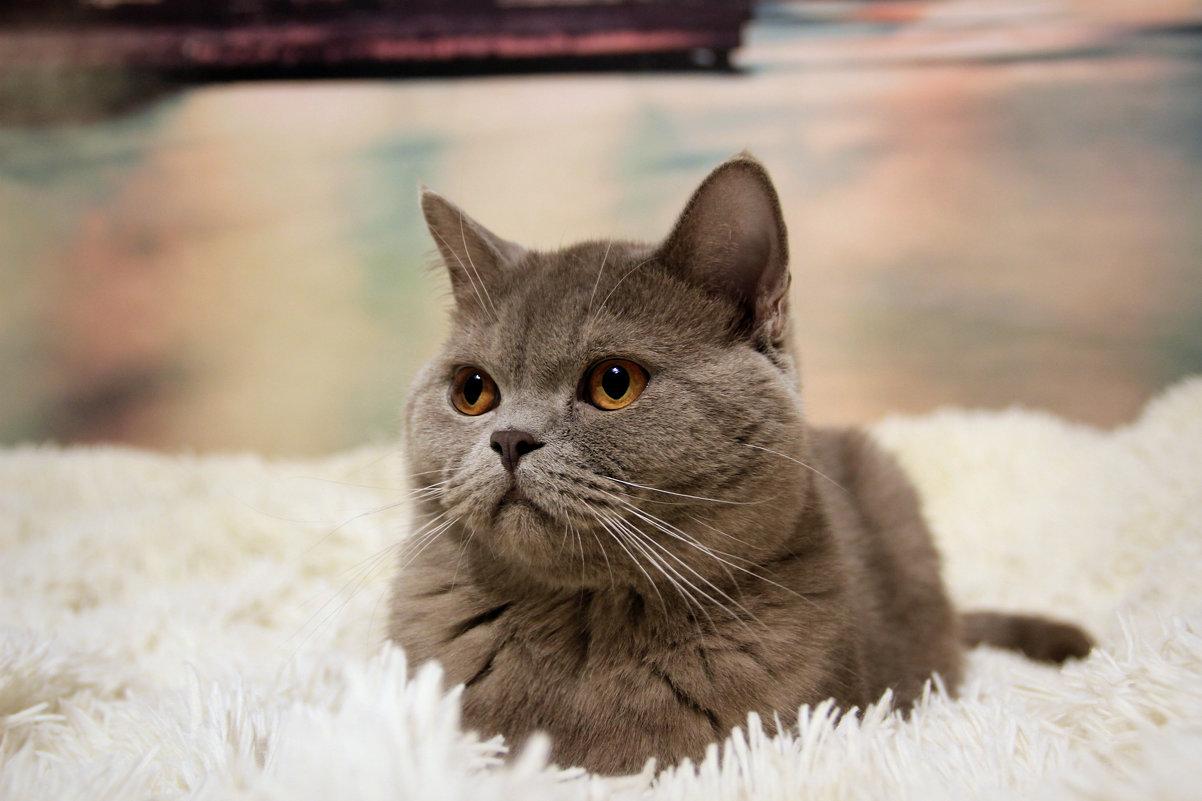 котяра - Tiana Ros