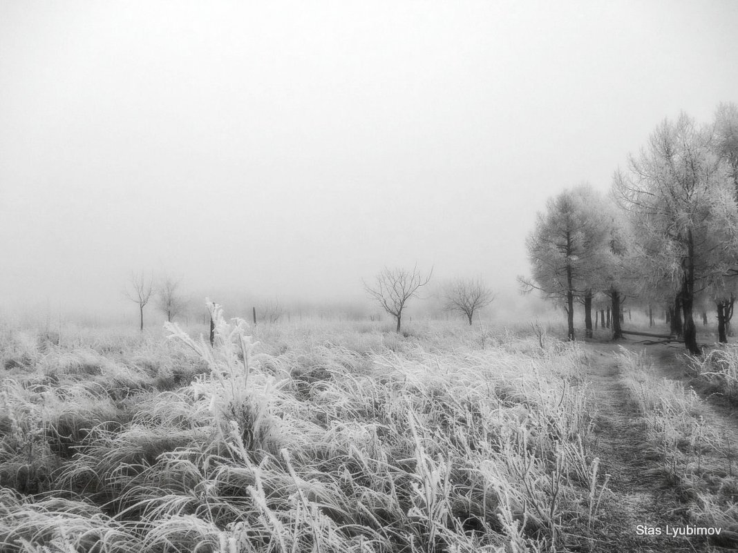 Туманное утро - Станислав Любимов