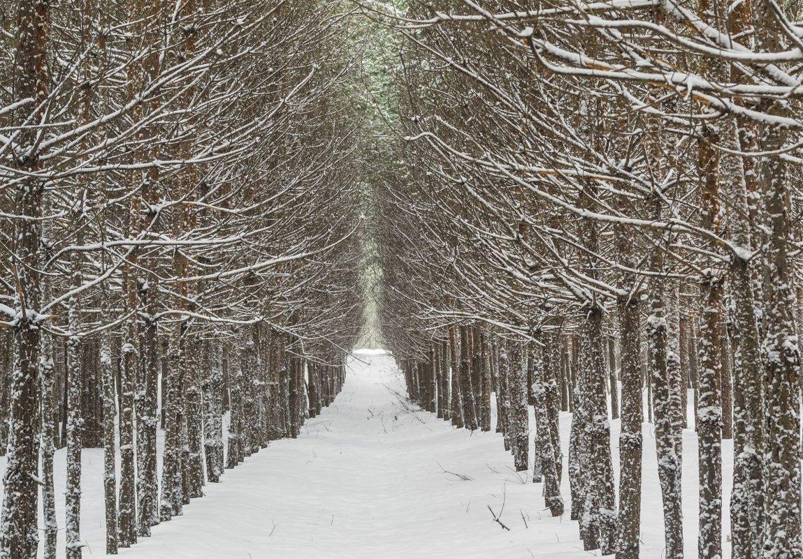 Лесные стражи - Сергей Корнев