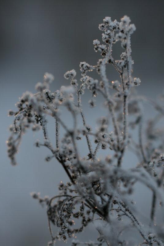 Зима. - юрий