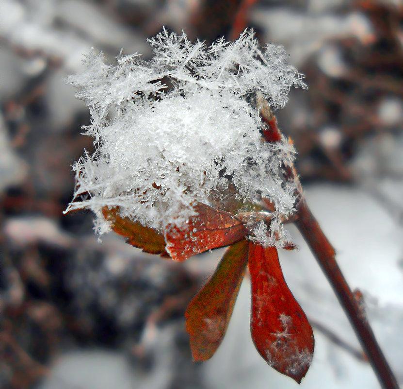 Снежные кристаллики. - Наталья