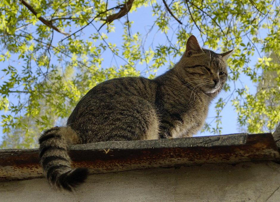 кот на крыше - Ирина ***