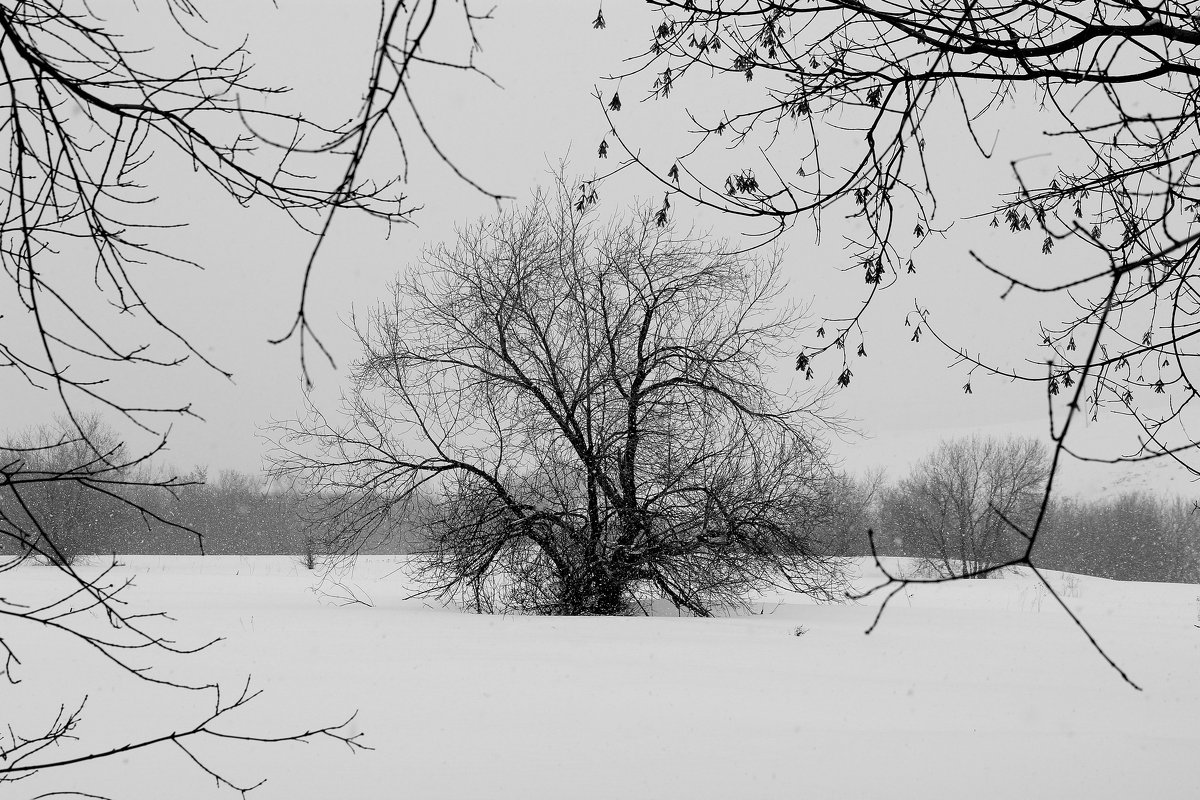 Монохромная  зима. - Vlad Borschev