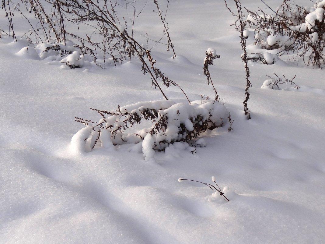 склонились травы под снегом... - Валентина. .