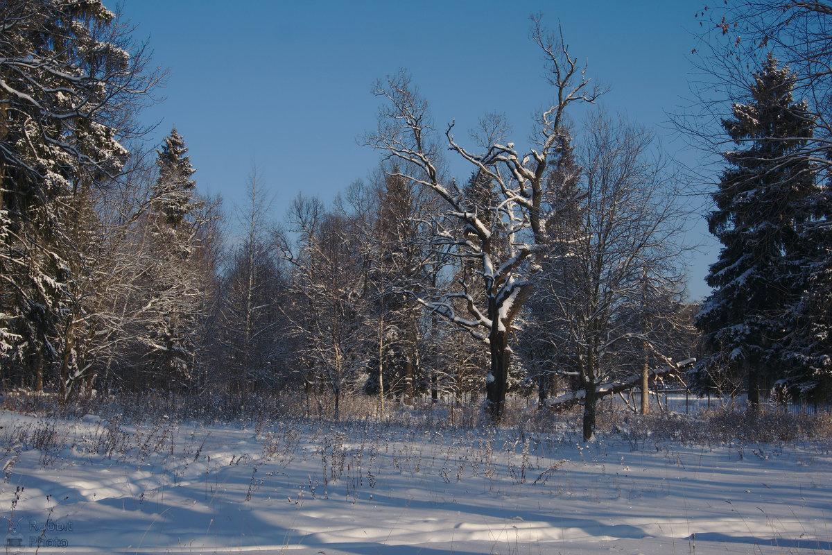 Зимний парк - Rabbit Photo