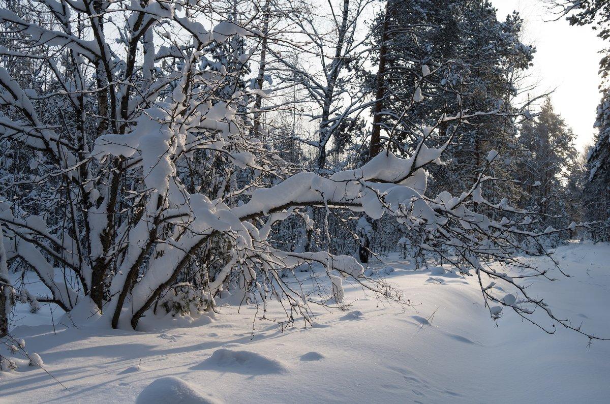 В лесу - Андрей Зайцев